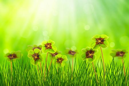 sunshine on green four leaf clover