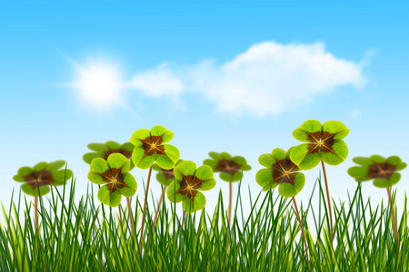four leaf clover in meadow on blue sky