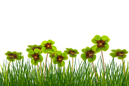 four leaf clover in meadow on white background Stock Photo