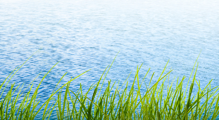 grass in front of the water - nature background
