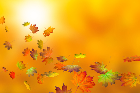 colorful maple leaves on abstract autumnal background Stock Photo
