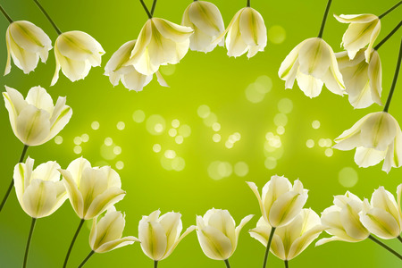 frame of white tulips on green background