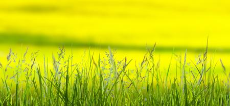 meadow in springtime Stock Photo