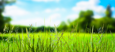 grass in front of blurred landscape Stock Photo