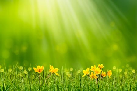 spring awakening in idyllic nature Stock Photo