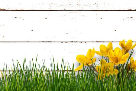 front garden in springtime