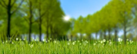blurred springtime background banner Banco de Imagens