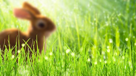 blurred easter bunny in springtime meadow Banco de Imagens