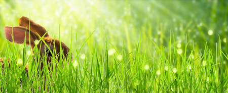 sunshine on cute rabbit on banner background