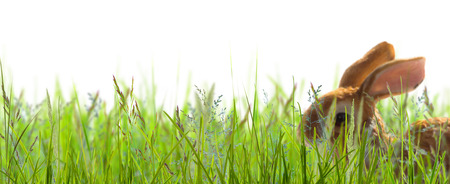 bunny in grass on white background