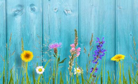 wild flowers on cyan wooden wall