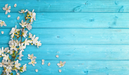 flowering branches on cyan wood