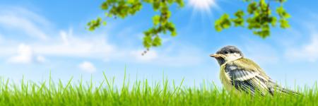 tit fledgling in meadow in springtime Banco de Imagens