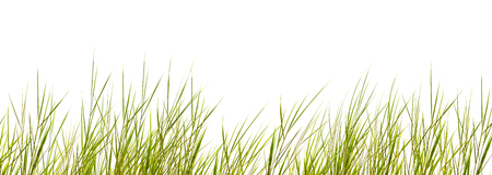 isolated grass blades on white background