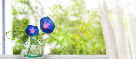 a airy springtime or summer day at home with flower decoration on window board, fresh blurred tree background