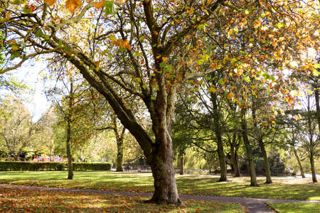 Victoria Park-English park landscape. A perfect place to relax