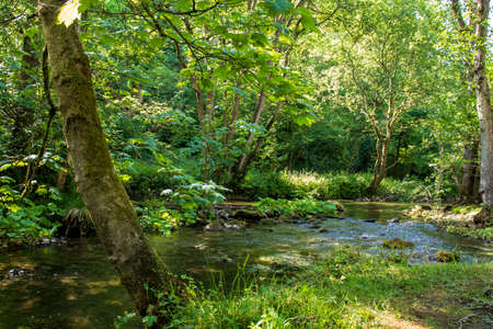 Dove Dale - beautiful view over the water among the green trees on a sunny day
