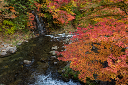 momiji: Fudo stream in autumn season at Nakano momiji mountain, Kuroishi, Aomori, Japan. Stock Photo