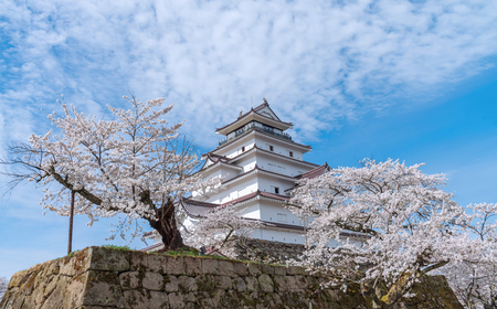 Tsuruga-jo castle with full blooming cherry blossom at Aizu-wakamatsu, Japan.