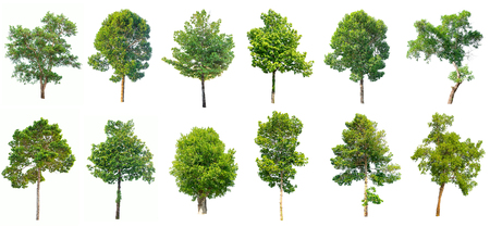 Collection of isolated trees on white background. Stok Fotoğraf