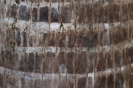 Brown wooden surface texture of tree trunk. Stok Fotoğraf