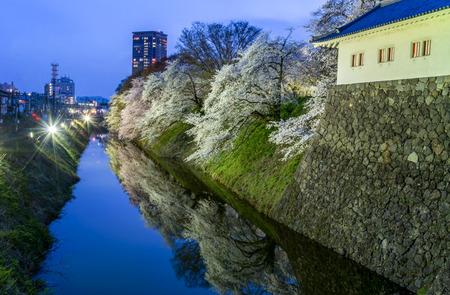 Full bloomed of cherry blossom along the castle moat at Kajo park, Yamagata, Japan.