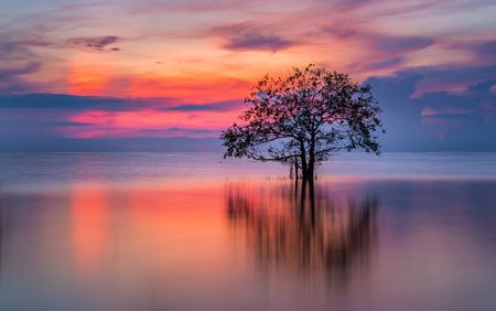 Tree in the lake with beautiful twilight.