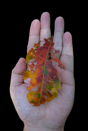 Colorful tattered leave on a hand palm with isolated black background. Stok Fotoğraf