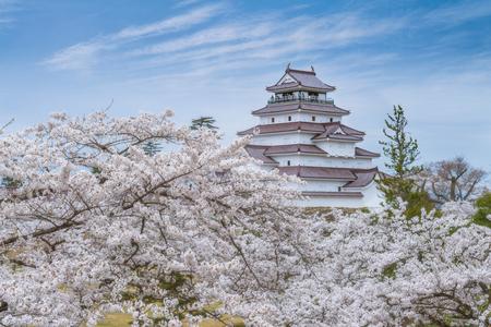 Beautiful cherry blossom full blooming around the Tsurugajo castle, Fukushima, Japan.