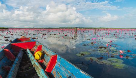 Beautiful scenery of red lotus at Thale noi lake in Phatthalung.