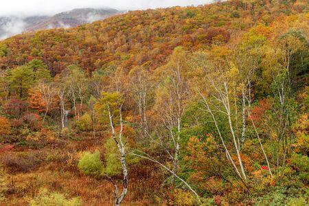 Mt.Shiga mountain area in beautiful autumn season at Nagano, Japan.