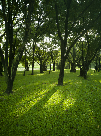 Suan Luang Rama 9 Park is the largest green space in Bangkok, Thailand