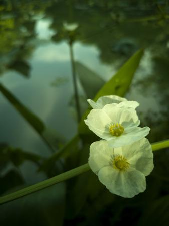 the white beautiful flowers