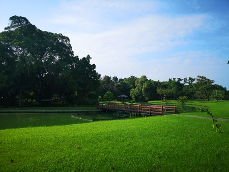 green view in the park 스톡 콘텐츠