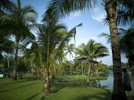 Coconut tree Background,  Thailand Asia, Blue Sky
