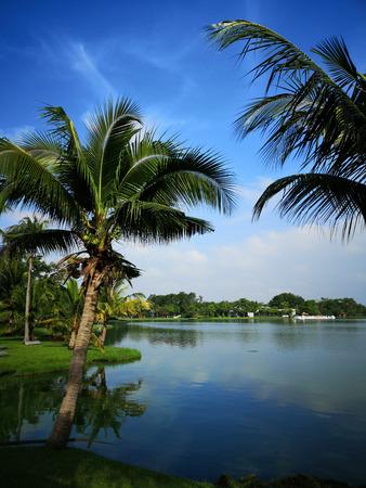 Coconut tree in Suan Luang Rama 9 Park, thailand
