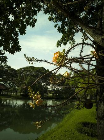 flower blooming on tree