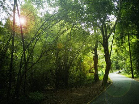 The forest in Kanchanaburi Province, Thailand, Green forest