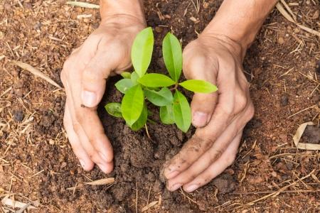 sembrando un arbol: Las manos del hombre la plantaci�n de una peque�a planta de concepto de la ecolog�a