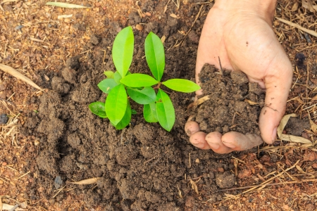 Man hands planting a small plant concept of ecology Stock Photo - 22808127
