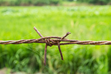 Rusty barbed wire fence on green background photo