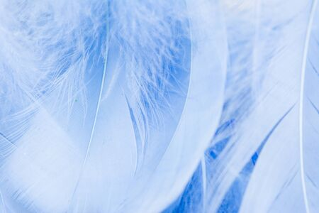 Soft focus of blue color trends teal or chicken feather texture background. feather soft pastel background. Closeup of white fluffy feather. Image nature art of wings bird for greeting card design