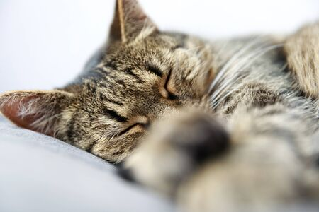 Close-up of tabby cat sleeping on bed at home Stock Photo