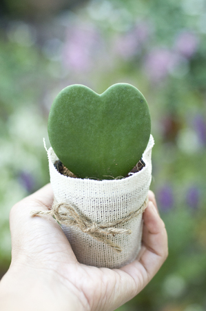 hand holding small green cactus In shape of heart in flower pot cover with light brown sack and brown bow Stock Photo