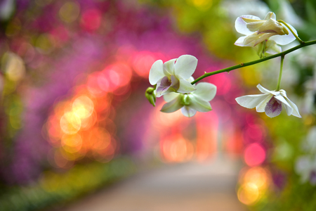Image of orchid tunnel with green, pink, white and purple color