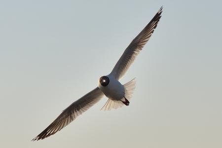 seagull birds flying on white clound background. Stock Photo