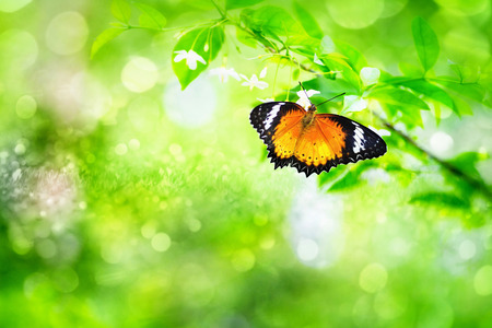 the butterfly on the beautiful flower and green leaf on the background