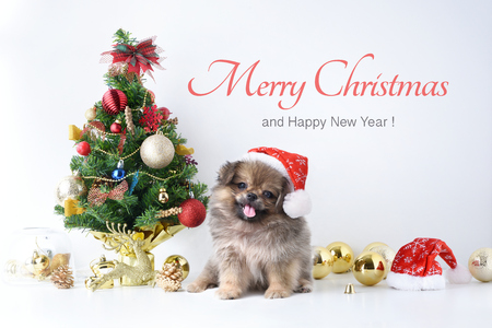 Happy New Year, Christmas, Dog in Santa Claus hat, Celebration balls and other decoration.