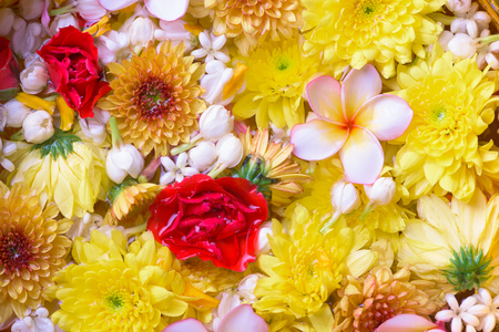 Colorful flower in water bowls decorating for Songkran Festival or Thai New Year. Stock Photo