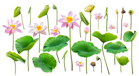 lotus and leaf isolated on white background